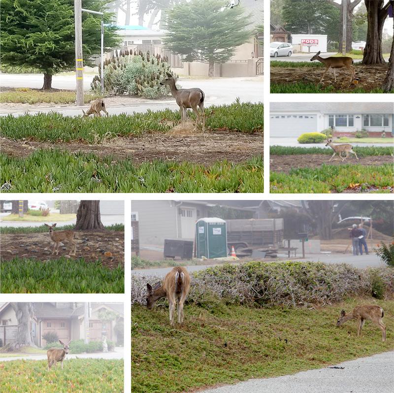 Deer in Front of the Rental