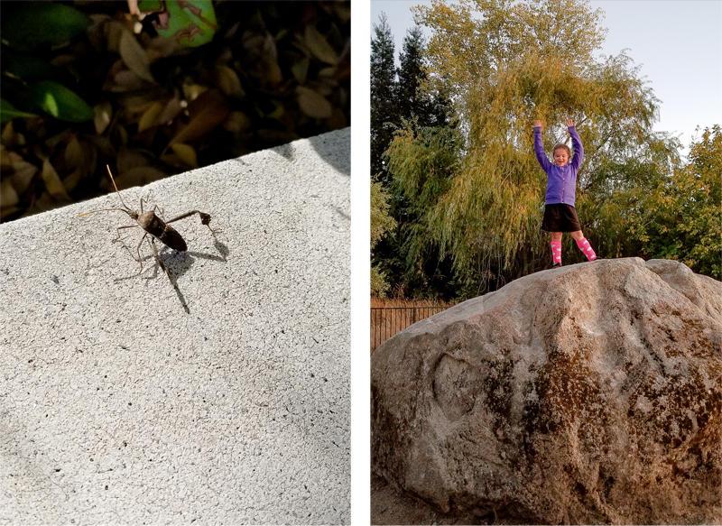 Bug and Up High