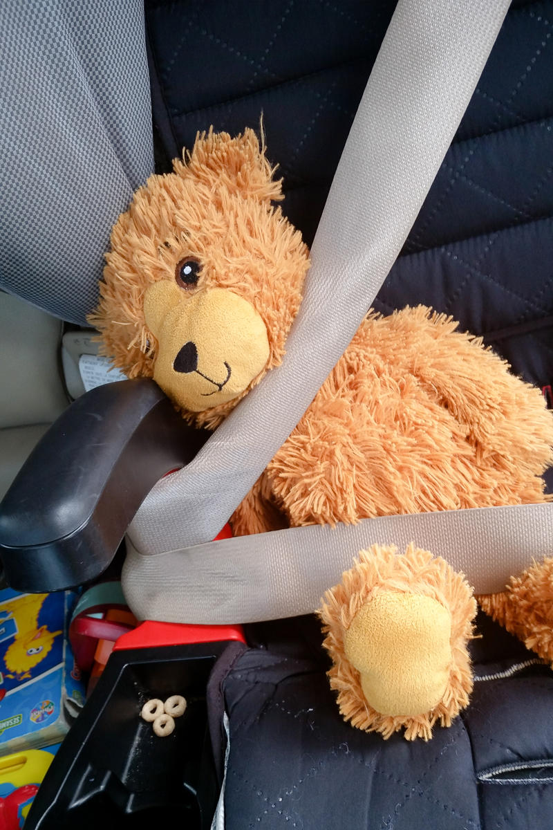 Teddy Strapped in